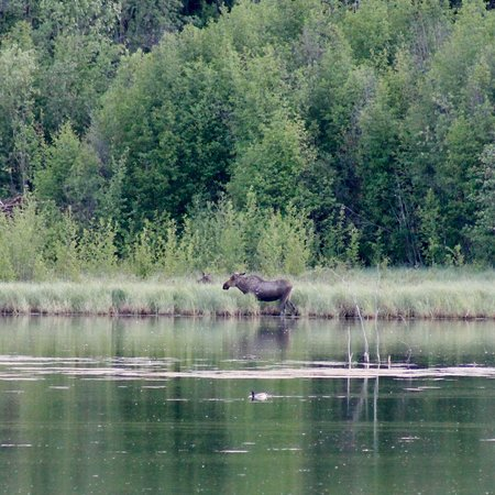 Toad River, Canada: photo5.jpg