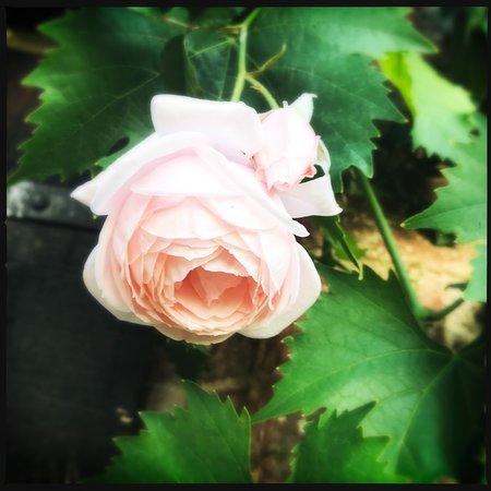 Farnetella, Italia: beautiful flowers all around property