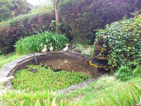 Altura Hotel: Garden