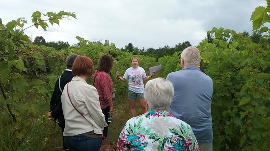 Shelburne Vineyard: Noelle talking about the vineyards