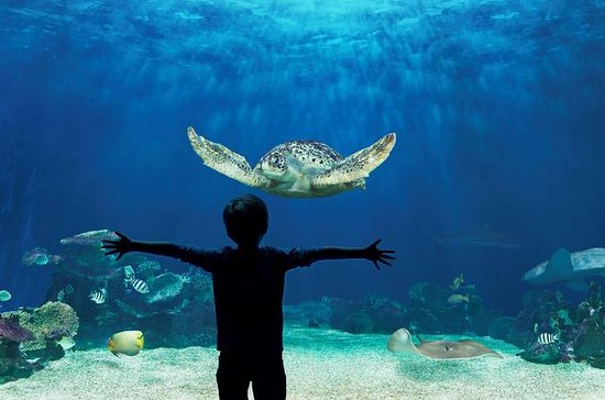 Skip the Line: Vancouver Aquarium...