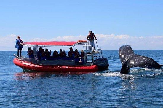 Byron Bay Whale Watching Cruise