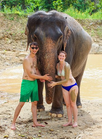 Elephants At 9 Dee Phuket