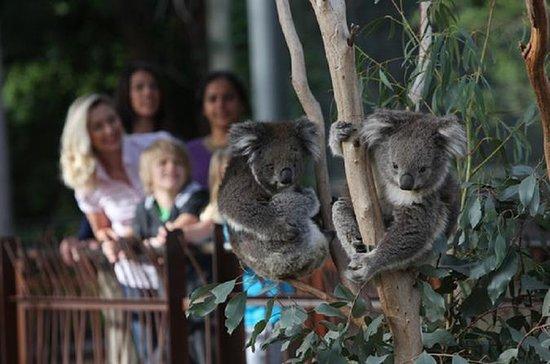Australian Wildlife Tour at Melbourne...