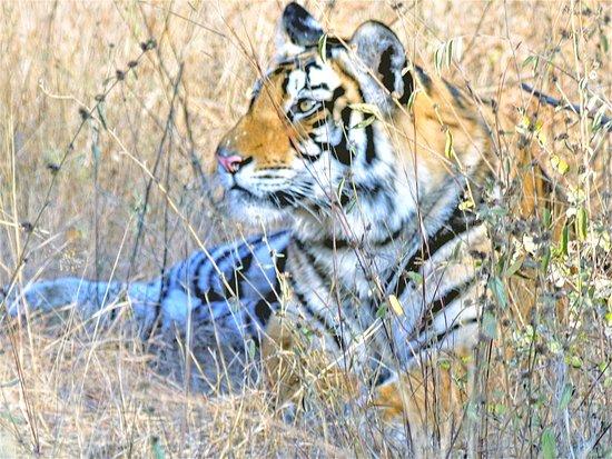 Madhya Pradesh Bild