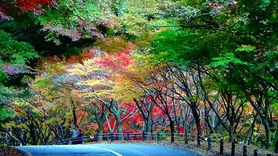 Naejangsan Paradise Park & Colorful Leaves Adventure