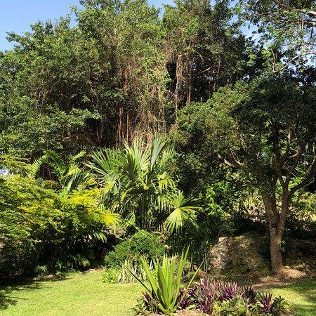 Andromeda Botanic Gardens: photo1.jpg