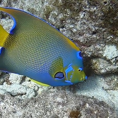 Rainbow Reef Dive Center: photo5.jpg