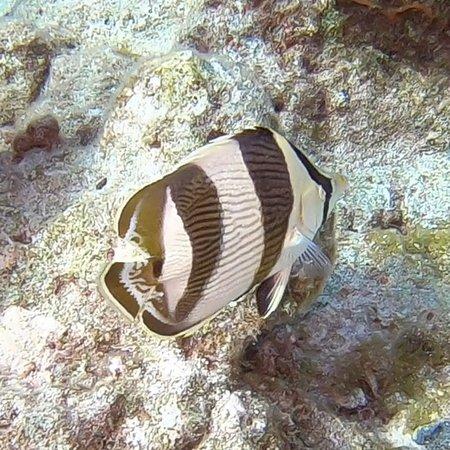 Rainbow Reef Dive Center: photo6.jpg