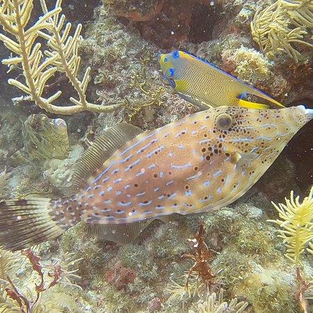 Rainbow Reef Dive Center: photo9.jpg