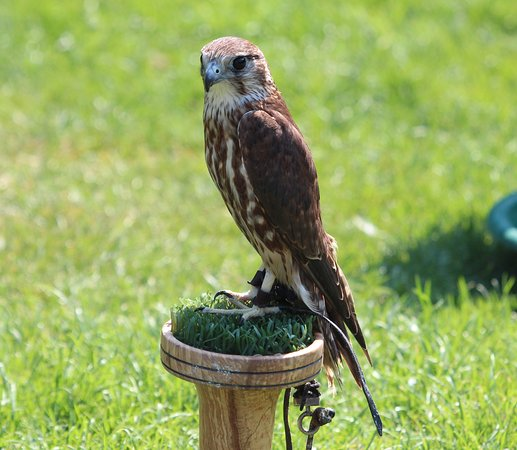 Willows Bird of Prey & Wildlife Trail