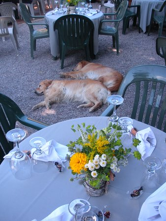 Swan Lake, MT: It's a dog's life in the peaceful garden of the Horse.
