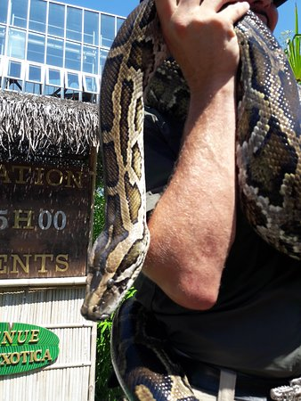 Animation Serpent : Un python - Picture of Planet Exotica