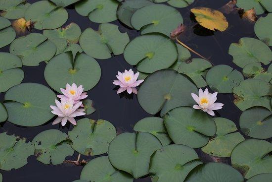 Omatsu no Ike Pond