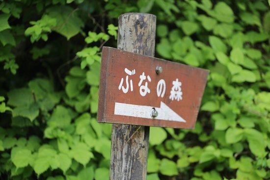Amamizukoshi Buna Forest