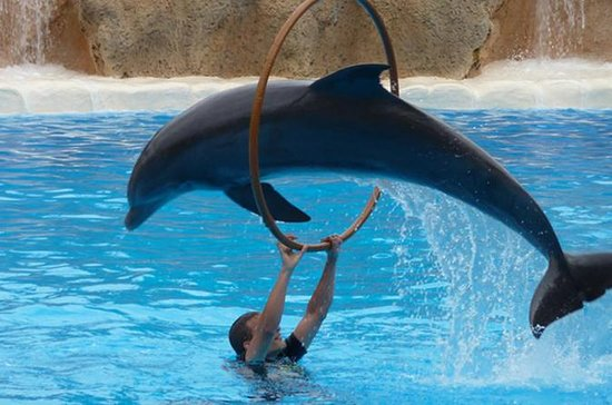 Agadir Dolphin Show Ticket With...