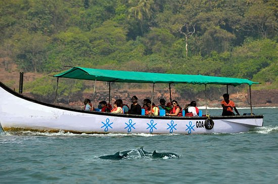 Private Dolphin Watching Tour A Fun Filled Day Excursion in Goa