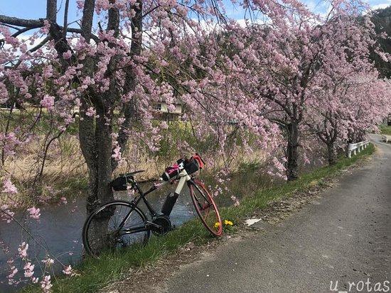 Furudono Sakura Road