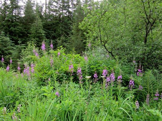 Fireweed Picture Of Juneau Rainforest Garden Tripadvisor