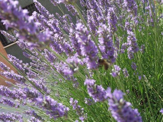 Flores Y Una Avispa Picture Of Campos De Lavanda Brihuega