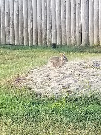 Green Harbor on the Ocean: Family of bunnies that we saw everyday 🐇