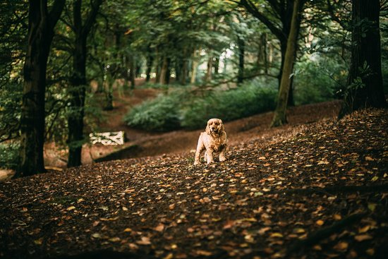 pet friendly hotels near me compare hotel prices now and know rh tripadvisor ca
