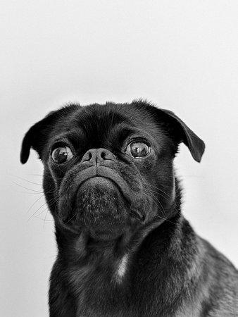 Pet Friendly Hotels in Burlington VT (+Pet Policies) - Hotel Planner. Your Fur-pup, Fido, Fab B