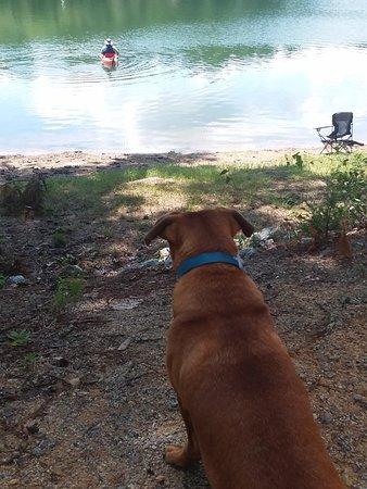 Lincolnton, GA: Pups loved it