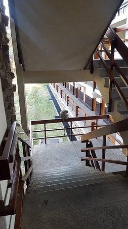 Lobo Wildlife Lodge: Monkey on the staircase