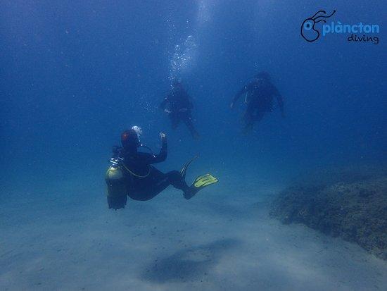 Plàncton Diving: Bautizo