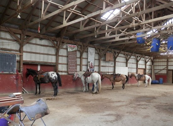 Painted Bar Stables: Ready and waiting for us