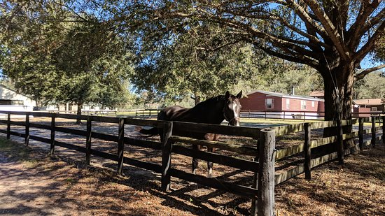 Reddick, FL: Corral with beautiful horse