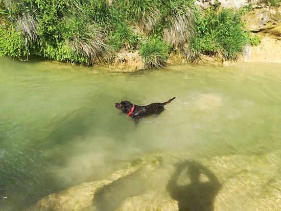 Castillazuelo, Spain: Los perros que visitan nuestro hotel disfrutan a tope con un buen baño en el Río Vero.