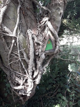 County Offaly, Ireland: 20180725_113110_large.jpg