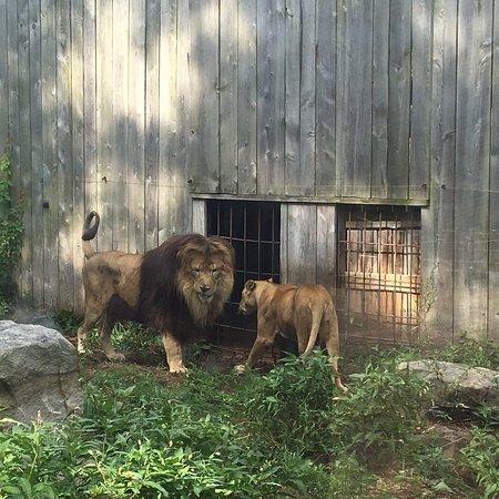 Living Treasures Animal Park: photo0.jpg