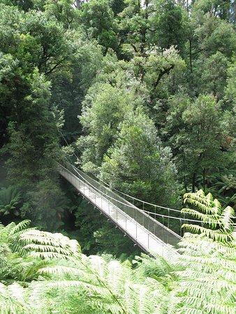 Balook, أستراليا: Suspension bridge