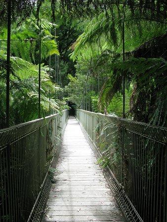 Balook, Australia: Canopy from the bridge