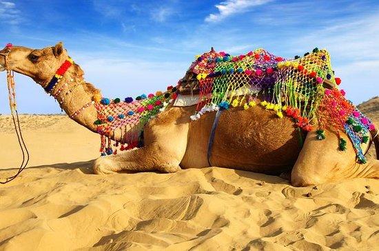 Experience Pushkar Camel Fair...