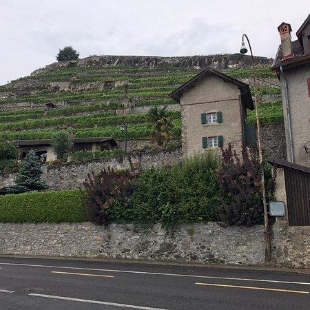 St-Saphorin-Lavaux照片