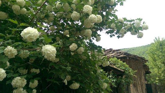 Bozhentsi, Bulgaria: the houses