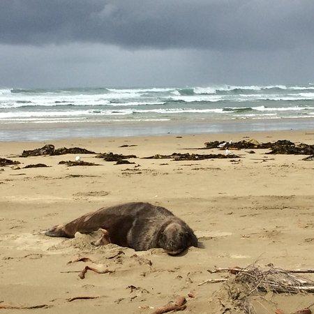 Surat Bay: prachtig strand en fascinerende zeeleeuwen!