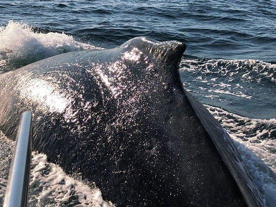 写真Whale Watchers Hermanus枚