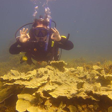 Pleasure Divers Magnetic Island: photo0.jpg