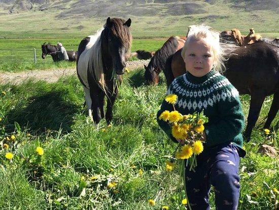 Sydra Skordugil - Horse Rental