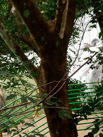 Pallickathodu, Indien: IMG_20180729_152132_large.jpg
