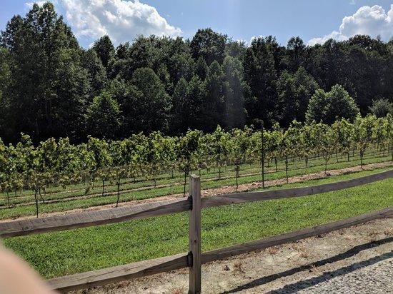 JOLO Winery & Vineyards: IMG_20180728_155726_large.jpg