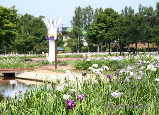 Iwamizawa, Japón: あやめ公園岩見沢