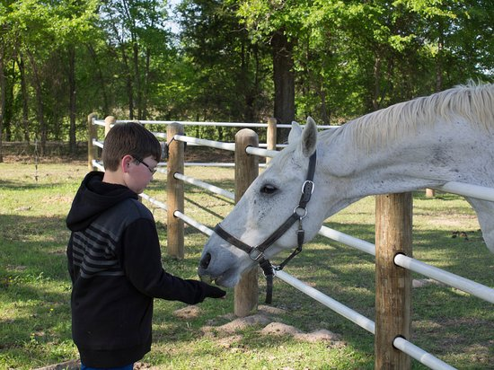 Yantis, TX: Feed the horses treats!