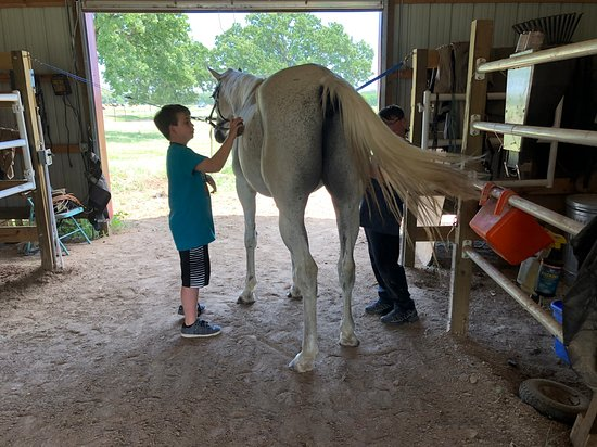 Yantis, TX: Learn horsemanship skills