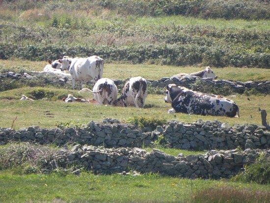 Auderville, Prancis: Si produce burro e Camembert